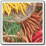 Gourmet Carrot Blend, Photo credit: Organic Seed People